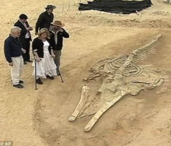 Baleine fossilisée dans le désert chilien