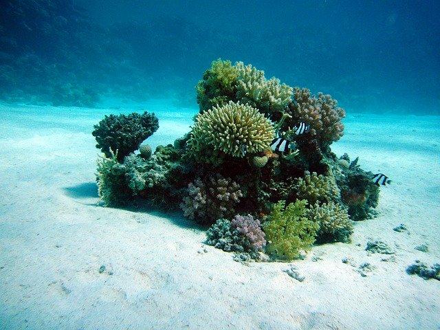 Les sols océaniques actuels plus profonds qu'avant le déluge