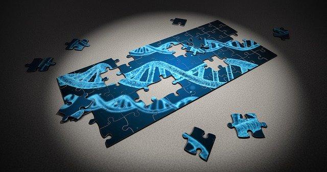 Les implications génétiques du couple originel, du déluge et l'entropie génétique