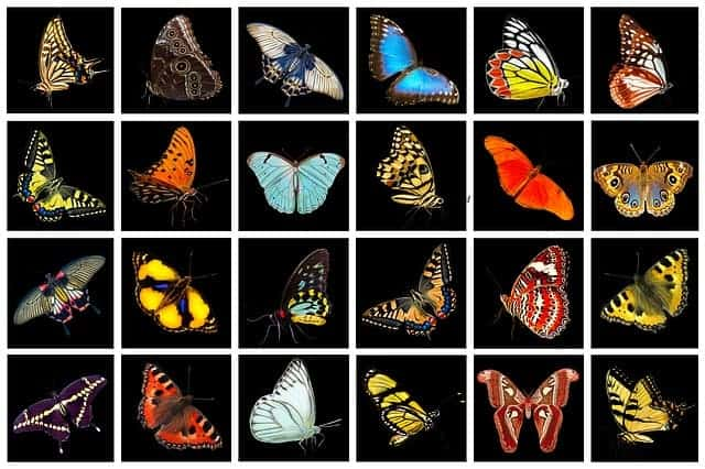 """La Sélection Naturelle et les Mutations Génétiques sont ils """"moteurs de l'Evolution"""" ?"""