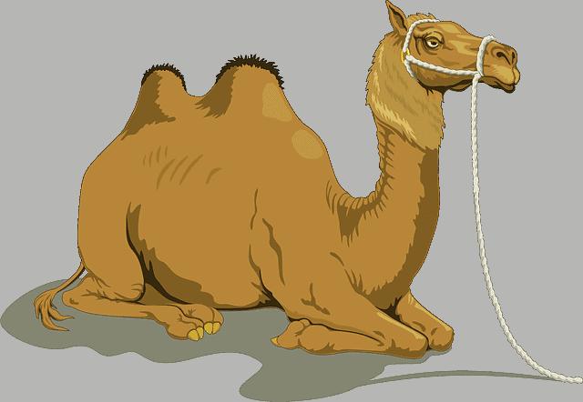 Les chameaux domestiqués existaient-ils à l'époque biblique d'Abraham ?