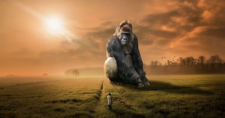 L'homme a-t-il un ancêtre commun avec les chimpanzés ?