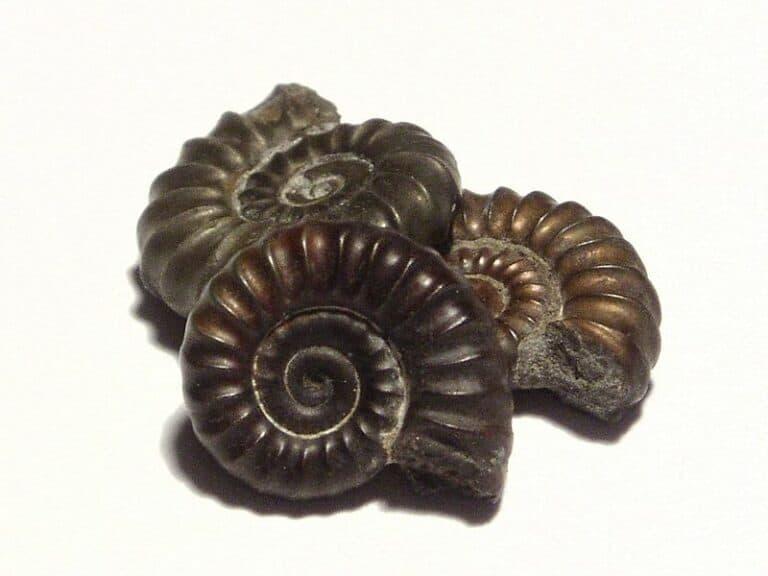 Comment se forment les fossiles ? Lentement ? Rapidement ?