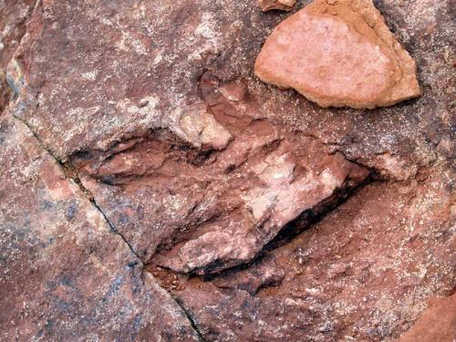Traces fossilisées de dinosaures