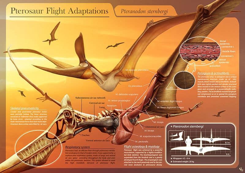 Le registre fossile démontre-t-il l'évolution ou une conception intelligente ?