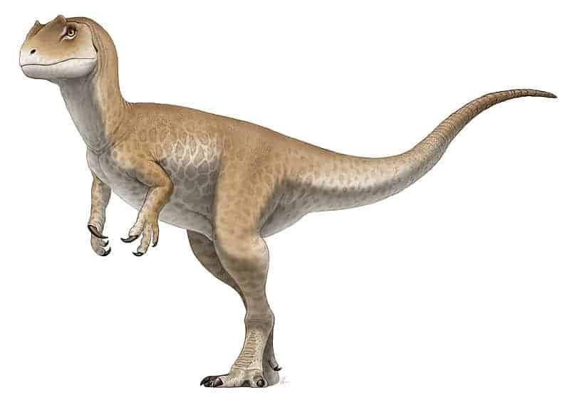 Le dinosaure Allosaurus jimmadseni