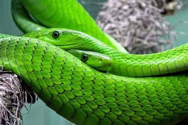 Le Serpent dans le Jardin d'Eden – Explication